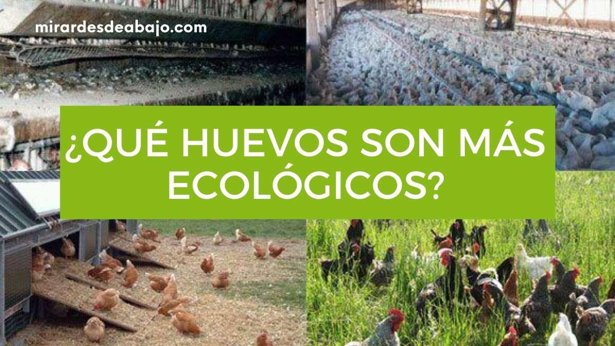 ¿Cuáles son los huevos más ecológicos y saludables?