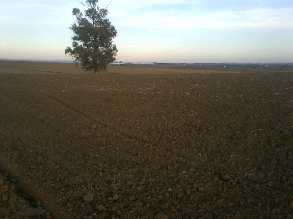 El campo sin árboles es malo contra el cambio climático