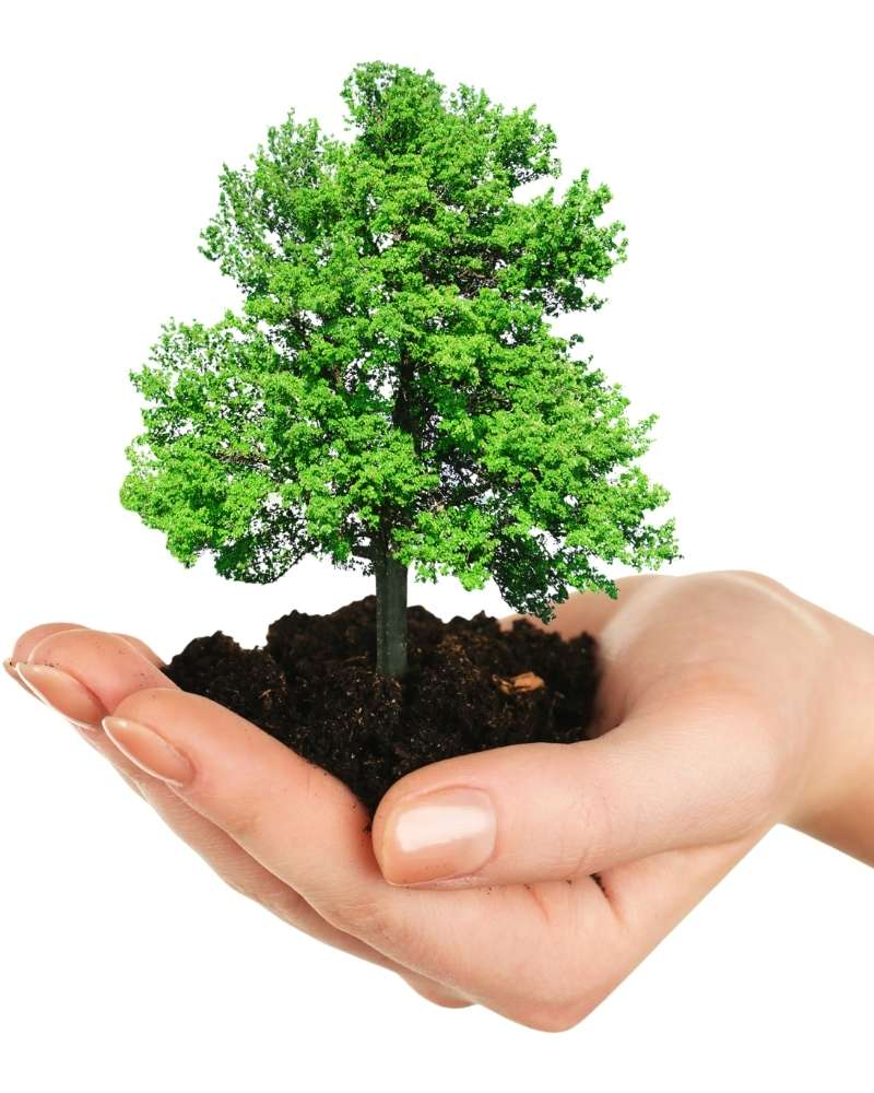 imagen mano y árbol mirardesdeabajo.com