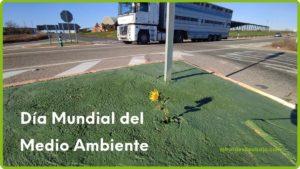 Imagen girasol en carretera por el Día Mundial del Medio Ambiente